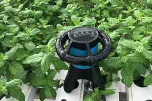 Um robô para cultivos hidropônicos