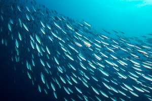 Salvar o futuro: a preocupante situação do Mar Mediterrâneo