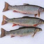 Consumo elevado de pescado durante el embarazo podría aumentar el riesgo de obesidad en niños