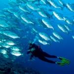 Chile amplía la protección de las áreas marinas