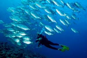 funiber-areas-marinas