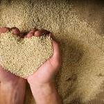 Equipo de investigadores internacionales estudia genoma de la quinoa