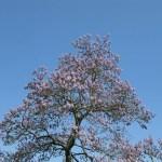 El árbol que nos ayudaría a combatir el calentamiento global