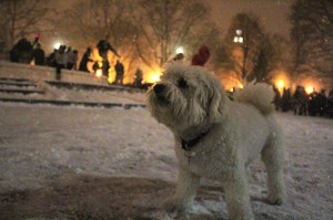 A dog stands in Dupont Circle during a snowball fight earlier this year. Hatchet File Photo