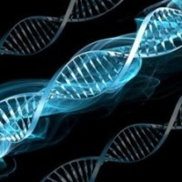 Genetic Engineering- Bane or a Boom?