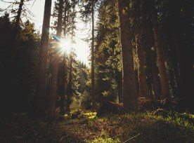 forest-480463_640
