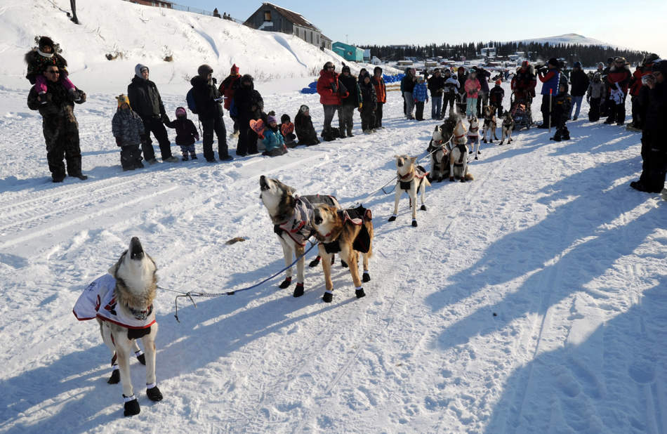 Sled dogs in Aliy Zirkle's team howl as they get ready to leave White Mountain in Alaska, Tuesday, March 12, 2013, during the Iditarod Trail Sled Dog Race. (AP Photo/The Anchorage Daily News, Bill Roth)  LOCAL TV OUT (KTUU-TV, KTVA-TV) LOCAL PRINT OUT (THE ANCHORAGE PRESS, THE ALASKA DISPATCH)