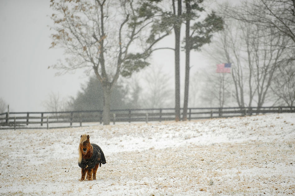 A lone horse stands in a snowy pasture along Sperryville Pike in Culpeper County, Va. on Tuesday, Jan. 21, 2014.  A swirling storm with a potential for more than a foot of snow clobbered the mid-Atlantic and the urban Northeast on Tuesday, grounding thousands of flights, closing government offices in the nation's capital and giving students another day off from school.  (AP Photo/The Free Lance-Star, Suzanne Carr Rossi)