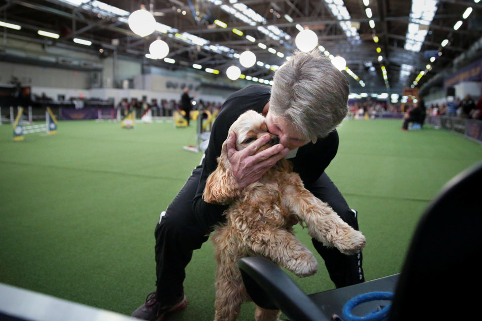 Martha Gurney hugs Dillon, the cocker spaniel, after completing the jumpers course during the Masters Agility Championship at Westminster staged at Pier 94, Saturday, Feb. 8, 2014, in New York. The competition marks the first time mixed-breed dogs have appeared at Westminster. (AP Photo/John Minchillo)