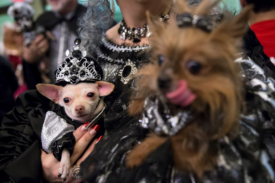 Costumed pets and their owners attend the 2014 New York Pet Fashion Show at the Hotel Pennsylvania, Friday, Feb. 7, 2014, in New York. (AP Photo/John Minchillo)