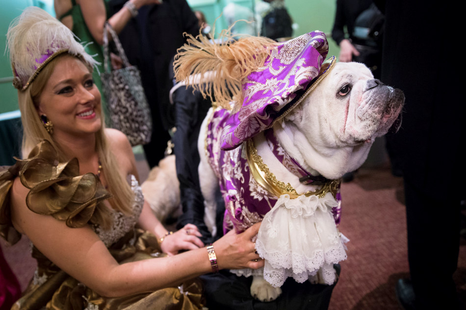 Champ the bulldog and his owner Neely Waring, of Coral Springs, Fla., attend the 2014 New York Pet Fashion Show at the Hotel Pennsylvania, Friday, Feb. 7, 2014, in New York. (AP Photo/John Minchillo)