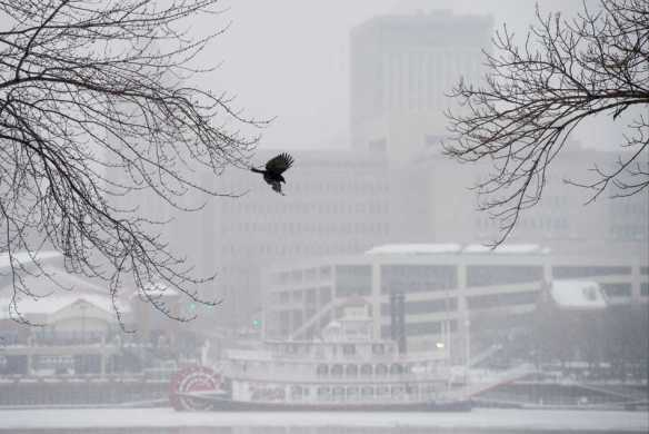 FRED ZWICKY/JOURNAL STAR A bird flies off as snow creates a white-out haze Feb. 4 over the Illinois River.