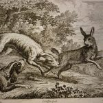 rabbits-hunted