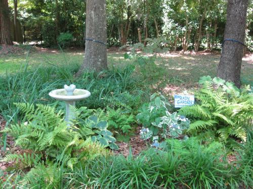 Medium Of Rain Garden Plants