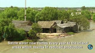 Climate Change 1 – Vietnam: Climate Change Threatens Rice Production