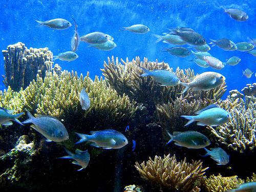 La humanidad ha exterminado las especies de peces que le sirven de alimento