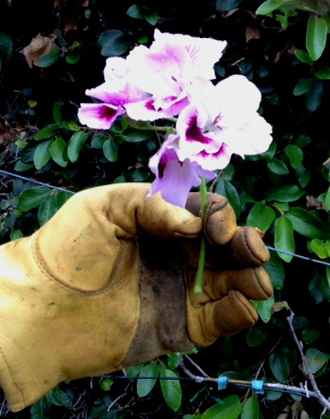 Photo of glove holding flower