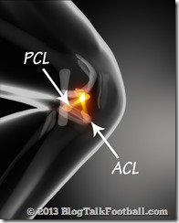 Anterior and posterior cruciate ligaments