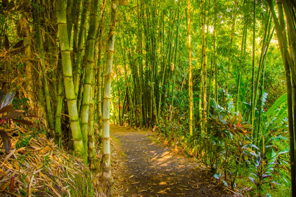 Bamboo tropical forest