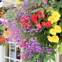 How to Prep and Plant Hanging Baskets