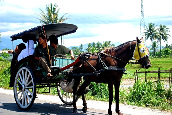 Horse and buggy in Indonesia