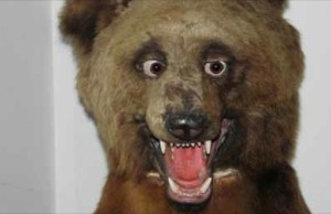 Taxidermy_Bear_Banner_11_13_14