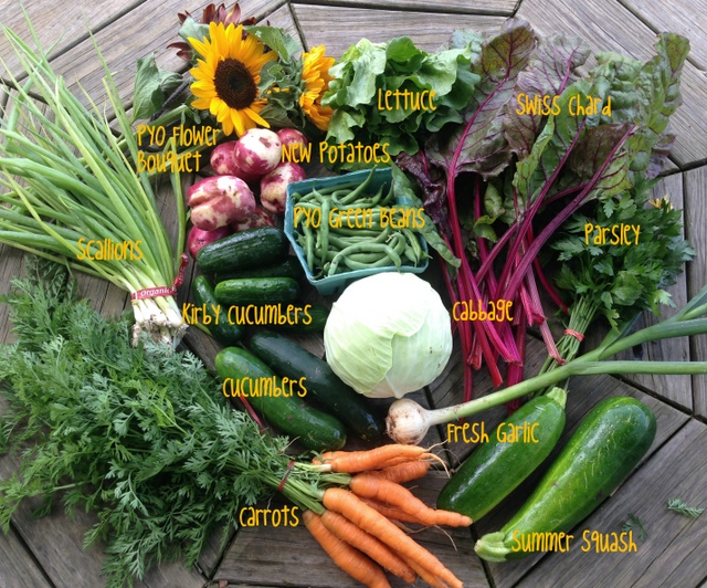 7/7/15, on-farm share #6