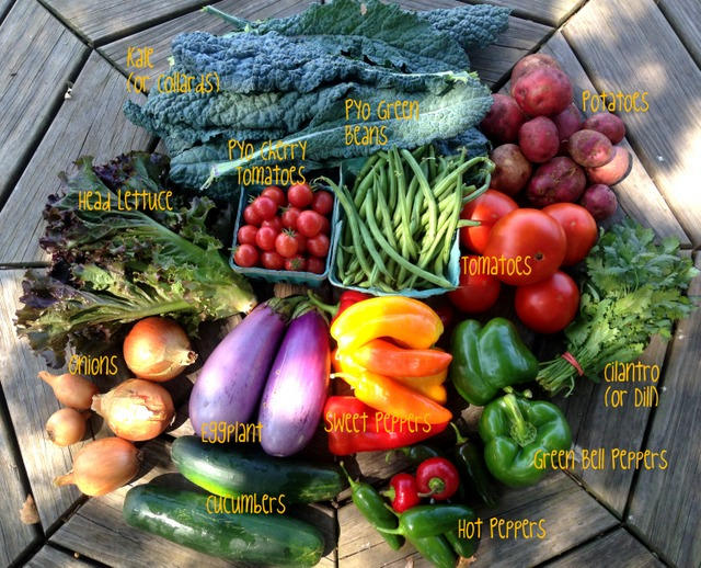 9/8/15, on-farm CSA share #15, week A