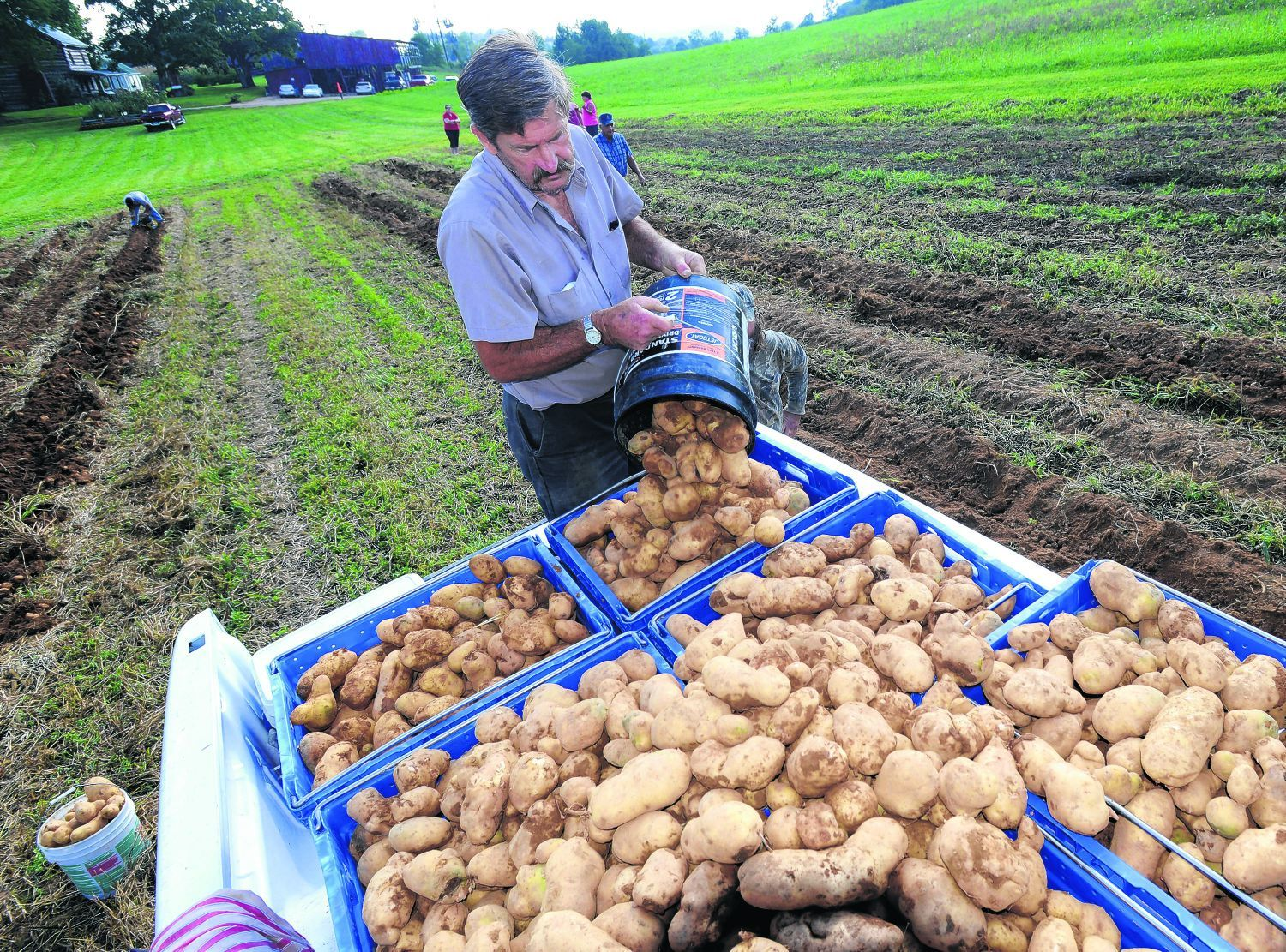 Inspiring A Pound How Many Potatoes Glade Tractor Association Potatoes Tractor Association Donating Nearly Pounds Potatoes How Many Idaho Potatoes A 5 Pound Bag houzz 01 How Many Potatoes In A Pound