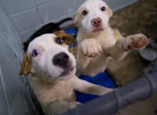 Medium Of Lexington Animal Shelter
