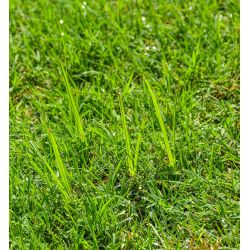 Small Crop Of Lawn Doctor Reviews