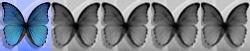 1 Schmetterling von 5