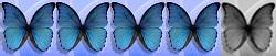 4 Schmetterlinge von 5
