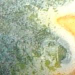 tea cup detail copy