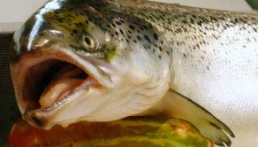 CNN Flip Flop:  Benefits of Eating PCB Ladened Farmed Fish Outweigh Risks