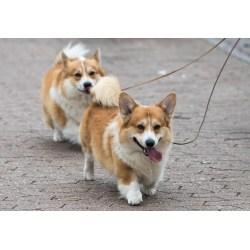 Small Crop Of Calmest Dog Breeds