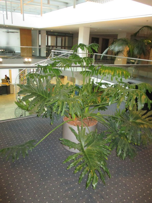 Office-Plants #10