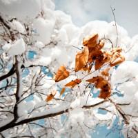 Devil Tree Pods | Blurbomat.com