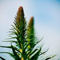 More Weird Vegetation - Laguna Beach | Blurbomat.com