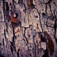 Barking - Tree | Blurbomat.com