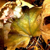 The Leaves are Still Here   Blurbomat.com
