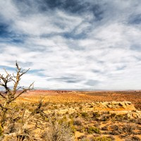 Bare desert tree | Blurbomat.com