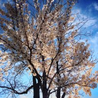 More Spring Blossoms | Blurbomat.com