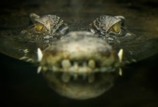 British-Journalist-killed-by-crocodile-while-washing-hands