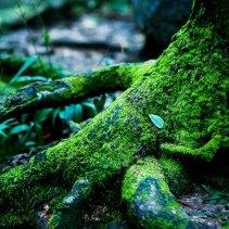 Moss5