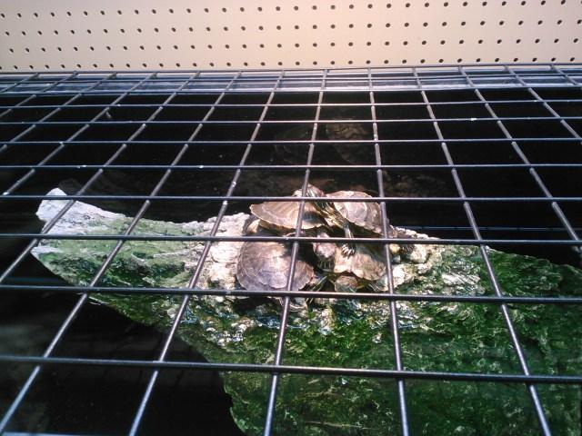 Picture Postcard: Turtle Jailbreak | Mr. Blog's Tepid Ride