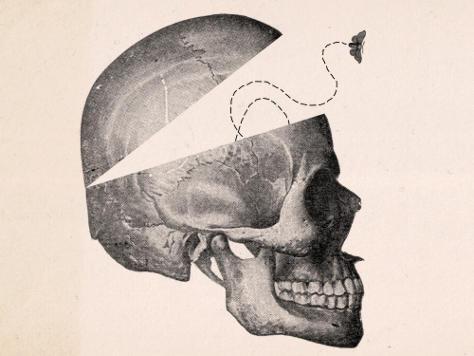 Empty skull illustration.