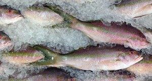Fish-Ines-Hegedus-Garcia