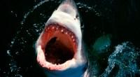 Lançamentos da Universal e da Paramount incluem Jurassic World e edição especial de Tubarão