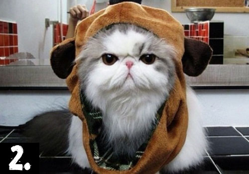 Persian-Cat-Top-10-most-populars-cats-in-2015